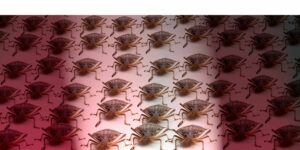 A picture of a large group (or army) of bugs